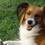 As vantagens psicológicas de ter um animal em casa